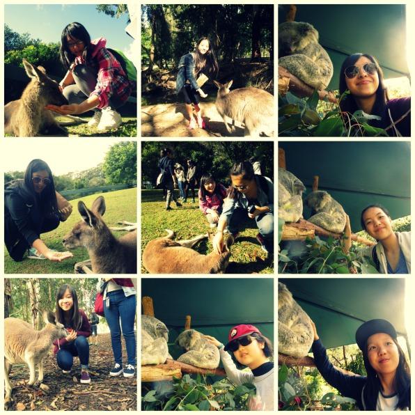 Animal Closeups Zoo