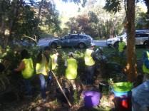 bushcare 2
